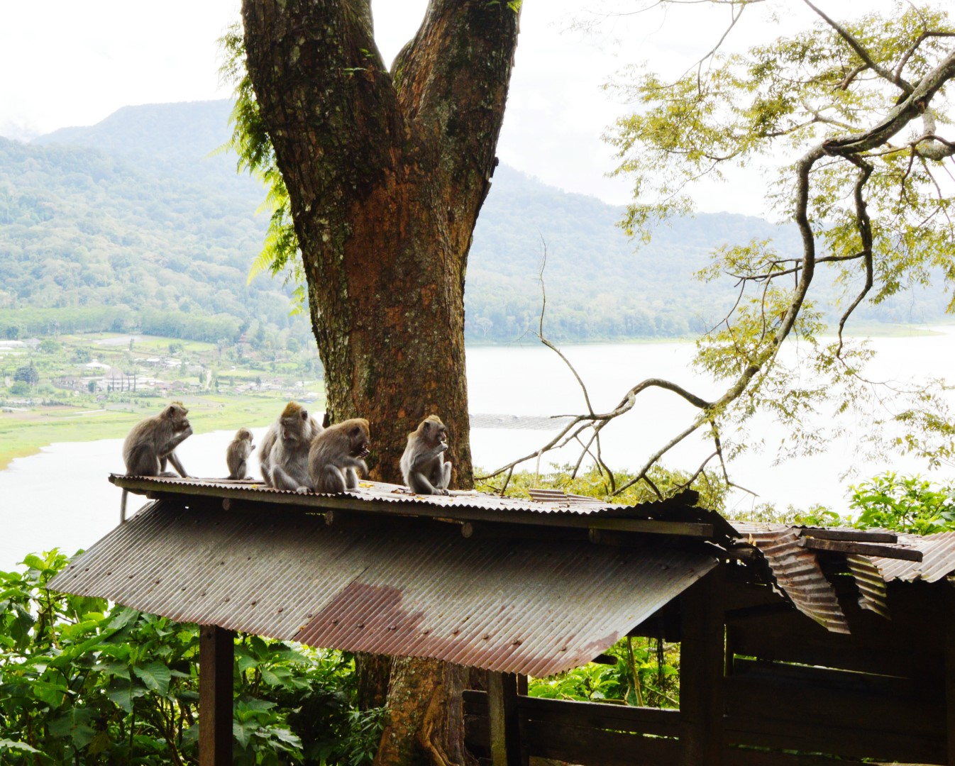 12-monkeys-in-bali